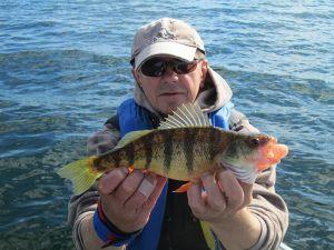 fall-perch-fishing-simcoe-oct-2016